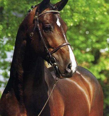 Horse_Coriander-big